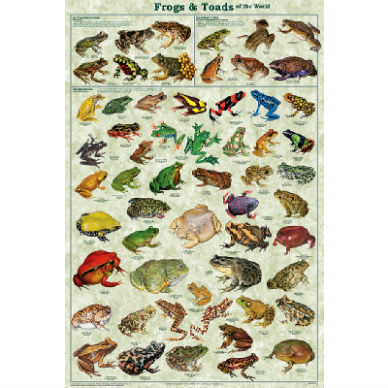 Frogs and Toads of the World Poster