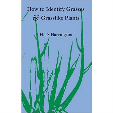 How to Identify Grasses