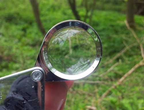 How to Use a Hand Lens Magnifier
