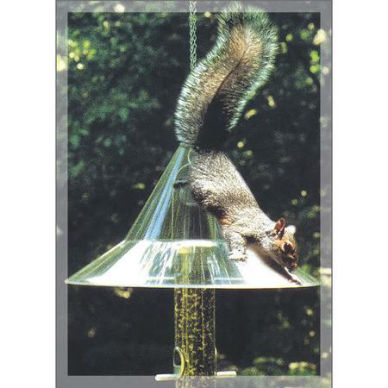 Mandarin Squirrel-Away Baffle