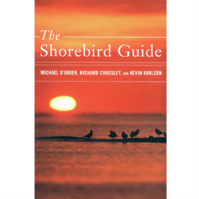Shorebird Guide