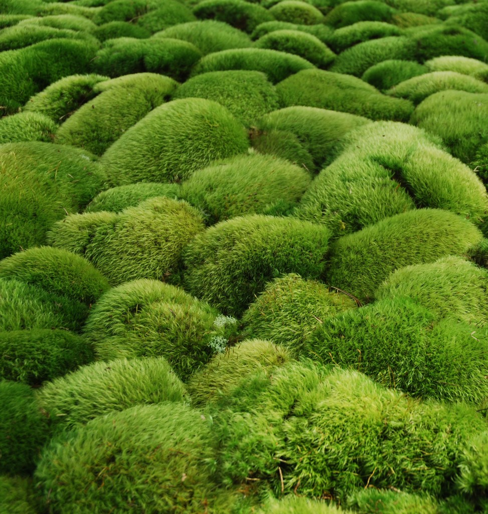 Mosses And Moss Gardening  With Annie Martin